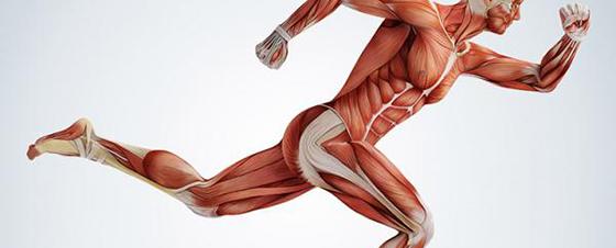 Enfermedades del musculo